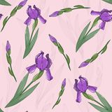 Seamless pattern with irises flowers. Floral Stock Photo
