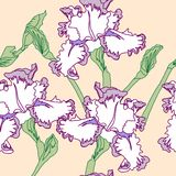 Seamless pattern  with irises Stock Photos