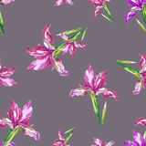 Seamless pattern from irises in watercolor. vector illustration
