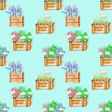 Seamless pattern with the isolated watercolor spices spicy herbs in a wood boxes. Onion green, parsley, cilantro, sage, lavender and basil, painted on a bright Royalty Free Stock Photography