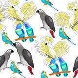 Seamless pattern Jaco, Lovebird, wavy parrot kakadu. Vector illu Royalty Free Stock Image