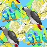 Seamless pattern Jaco, Lovebird, wavy parrot kakadu. Vector illu Stock Images