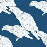 Seamless pattern Jaco parrot the blue  Africa  Vector illustrati Royalty Free Stock Images