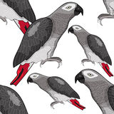Seamless pattern Jaco parrot the red-with shadows Africa. Vector Stock Photos