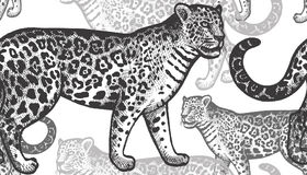 Seamless pattern with jaguars. Black jaguars on a white background. Hand drawing of an animal. Seamless vector pattern. Vintage style engraving. Illustration Royalty Free Stock Photo
