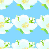 Seamless pattern with jasmine on a blue background. vector illus Stock Photos