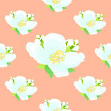 Seamless pattern with jasmine on a pink background. vector illus Stock Images