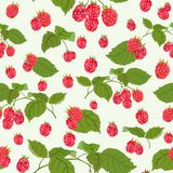 Seamless pattern with juicy raspberry. Vector illustration. Colorful pattern with raspberries. Sweet berry. Perfect for wallpaper, surface textures, textiles Royalty Free Stock Photography