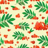 Seamless pattern with juicy rowan bunches. Vector illustration. Stock Image