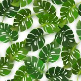 Seamless pattern with jungle tropical monstera leaves, vector il Stock Photography