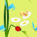 Seamless pattern with ladybug on grass, butterflies and daisies on a green background. Seamless pattern with ladybug on grass, butterflies and daisies on a Stock Images