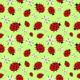 Seamless pattern of ladybugs and daisies salad royalty free illustration