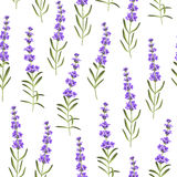 Seamless pattern of lavender flowers Stock Image