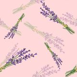 Seamless pattern with lavender. Vector flowers Royalty Free Stock Images