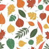 Seamless pattern with leaf, abstract leaf texture Stock Photography