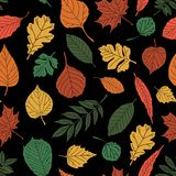 Seamless pattern with leaf, abstract leaf texture Royalty Free Stock Image