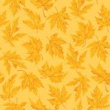 Seamless pattern with leaf,autumn leaf background. Vector illustration. Royalty Free Stock Image