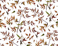 Seamless pattern leaf red orange yellow green brown tiny color l Royalty Free Stock Photo