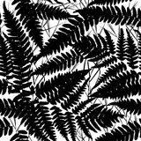 Seamless pattern with leafs tropical fern palm for fashion textile or web background. Black silhouette on white background. Vector Royalty Free Stock Images