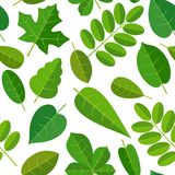Seamless pattern leafs. Vector flat color illustration. Isolated white background Stock Image