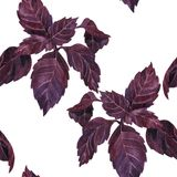 Seamless pattern with leaves of basil Royalty Free Stock Image