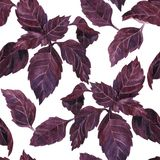 Seamless pattern with leaves of basil Royalty Free Stock Photography