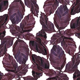 Seamless pattern with leaves of basil Stock Image