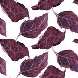 Seamless pattern with leaves of basil Royalty Free Stock Photos