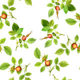 Seamless pattern with leaves and berries Stock Image