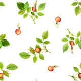 Seamless pattern with leaves and berries Royalty Free Stock Images