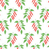 Seamless pattern leaves of Chinese Schisandra Royalty Free Stock Image
