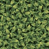 Seamless pattern with leaves of different shapes stock illustration