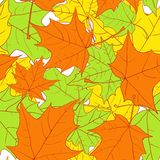 Seamless pattern with leaves of maple Royalty Free Stock Images