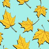Seamless pattern with leaves of maple Stock Image