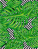 Seamless pattern of leaves monstera Royalty Free Stock Images