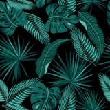 Seamless pattern of leaves monstera Stock Photography