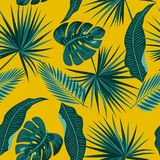 Seamless pattern of leaves monstera Stock Image