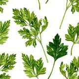 Seamless pattern with leaves of parsley Royalty Free Stock Photos
