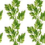 Seamless pattern with leaves of parsley Stock Photography