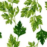 Seamless pattern with leaves of parsley Stock Photo