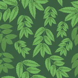 Seamless pattern leaves of rowan on green background. Royalty Free Stock Image