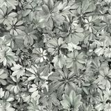 Seamless pattern, leaves, summer, black, white, grey, heat, flor. Design: a seamless pattern of rounded green leaves of tropical plants. Designed for printing on stock image