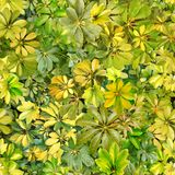 Seamless pattern, leaves, summer, light green, heat, flora, wall. Design: a seamless pattern of rounded green leaves of tropical plants. Designed for printing on royalty free illustration