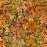 Seamless pattern, leaves, summer, orange, heat, flora, wallpaper. Design: a seamless pattern of rounded green leaves of tropical plants. Designed for printing on stock photos
