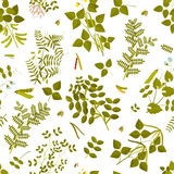 Seamless pattern with legumes plants and its leaves, pods and flowers Stock Photo