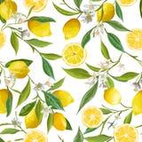 Seamless Pattern. Lemon Fruits Background. Floral Pattern Stock Images