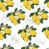 Seamless pattern with lemons. Stock Photography
