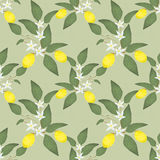 Seamless pattern with lemons Stock Photography