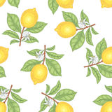 Seamless pattern with lemons. Illustration of lemons. Seamless vector pattern. Fruits on a white background Stock Photo
