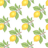 Seamless pattern with lemons. Illustration of lemons. Seamless vector pattern. Fruits on a white background stock illustration